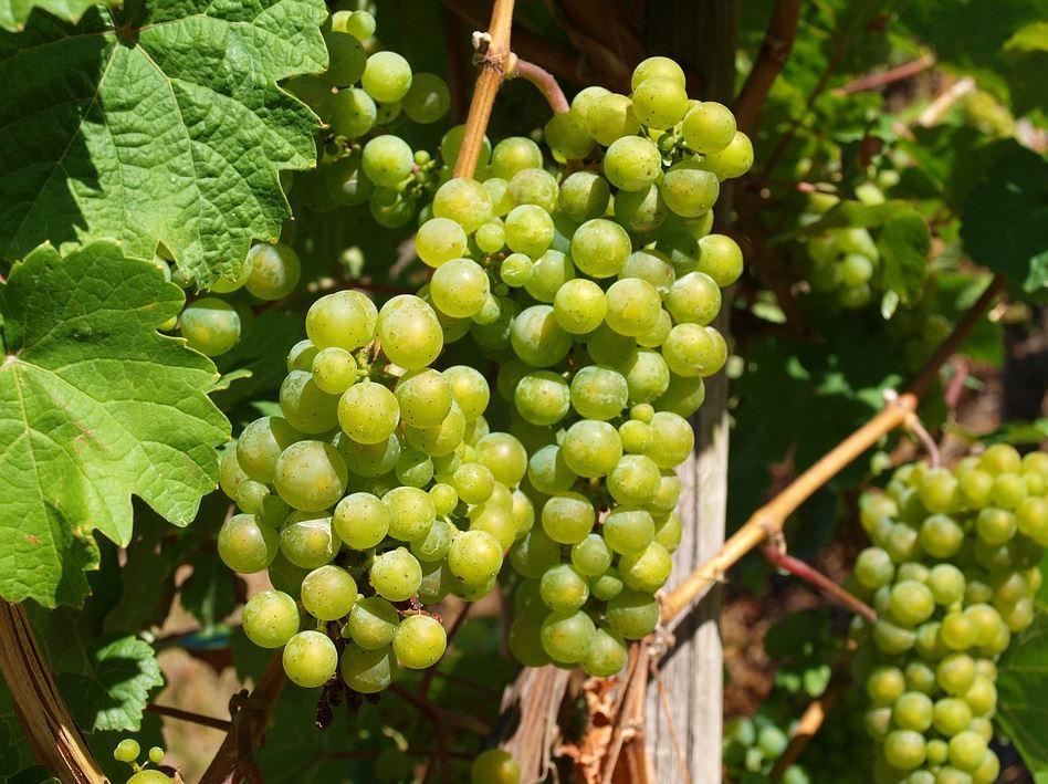 Heymann-Löwenstein Weingut mit hochwertigem Wein